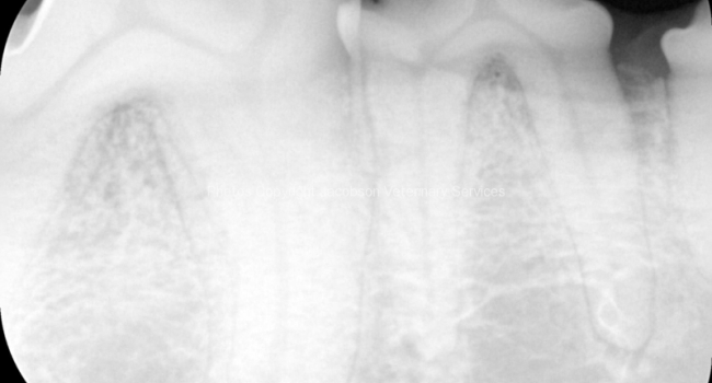 1c-radiograph-of-the-mandible-in-the-area-of-the-tumor